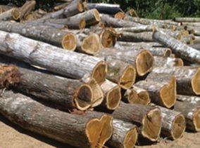 bahan-media-campuran-kayu
