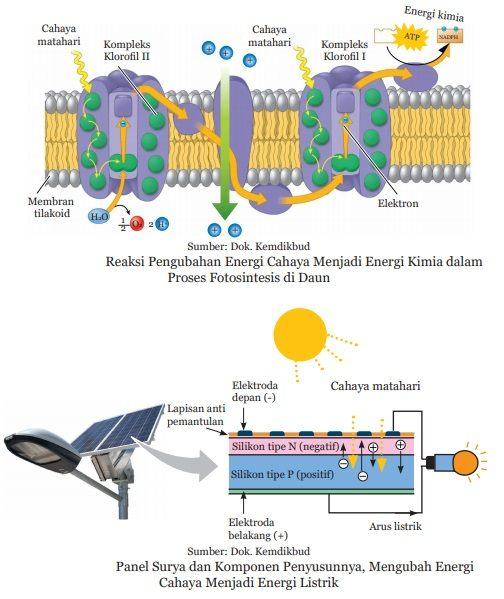 cara kerja solar panel meniru fotosintesis daun