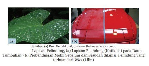 lapisan pelindung talas dan mobil