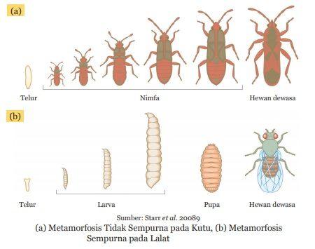 metamorfosis tidak sempurna kutu dan metamorfosis sempurna pada lalat