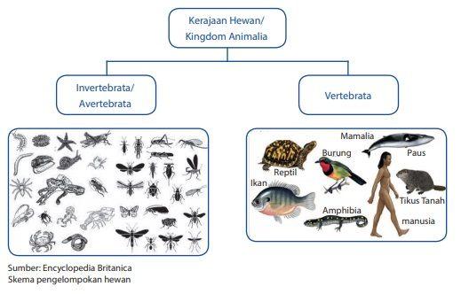pengelompokan kerajaan hewan kingdom animalia