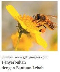 penyerbukan dengan antuan lebah