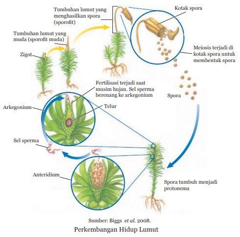 perkembangbiakan tumbuhan lumut