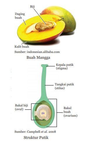 struktur dan asal muasal buah