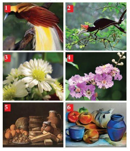 contoh objek menggambar flora fauna dan alam benda