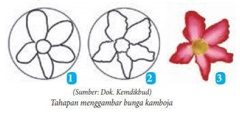 tahapan menggambar bunga kamboja